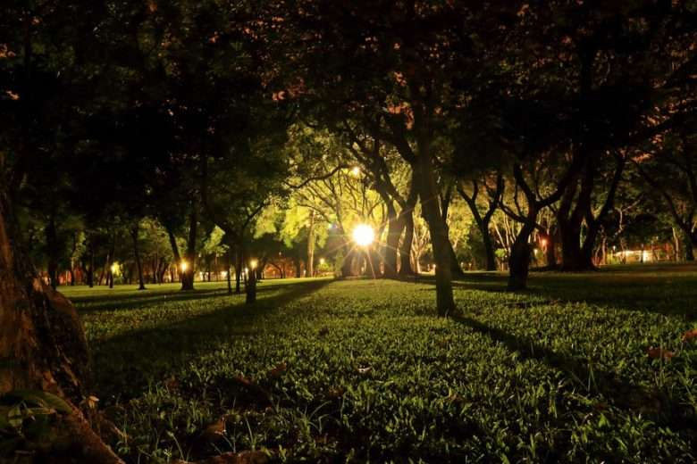 Lamp Lighting Up Branches and Grass in Park at Night
