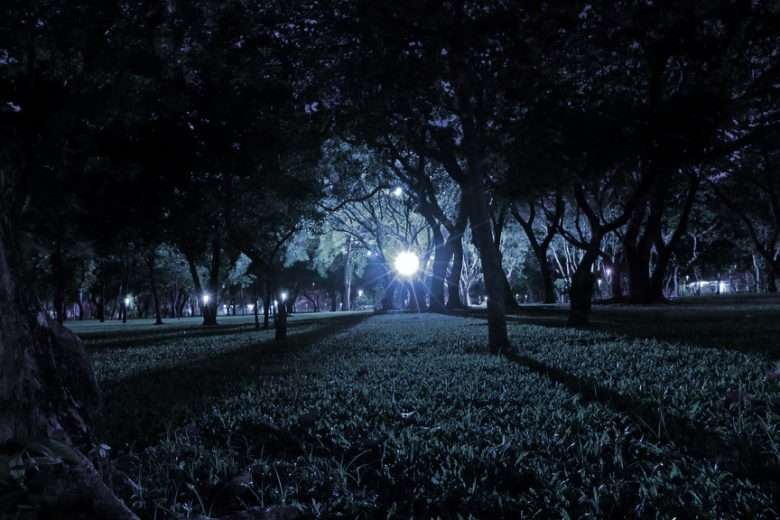 Cool Blue Lamp Lighting Up Branches and Grass in Park at Night.