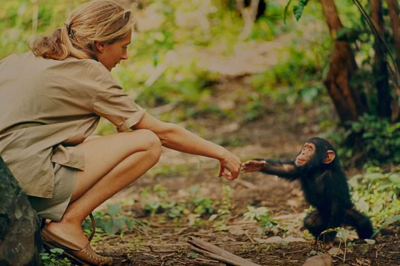 Jane Goodall interacting with a baby chimp