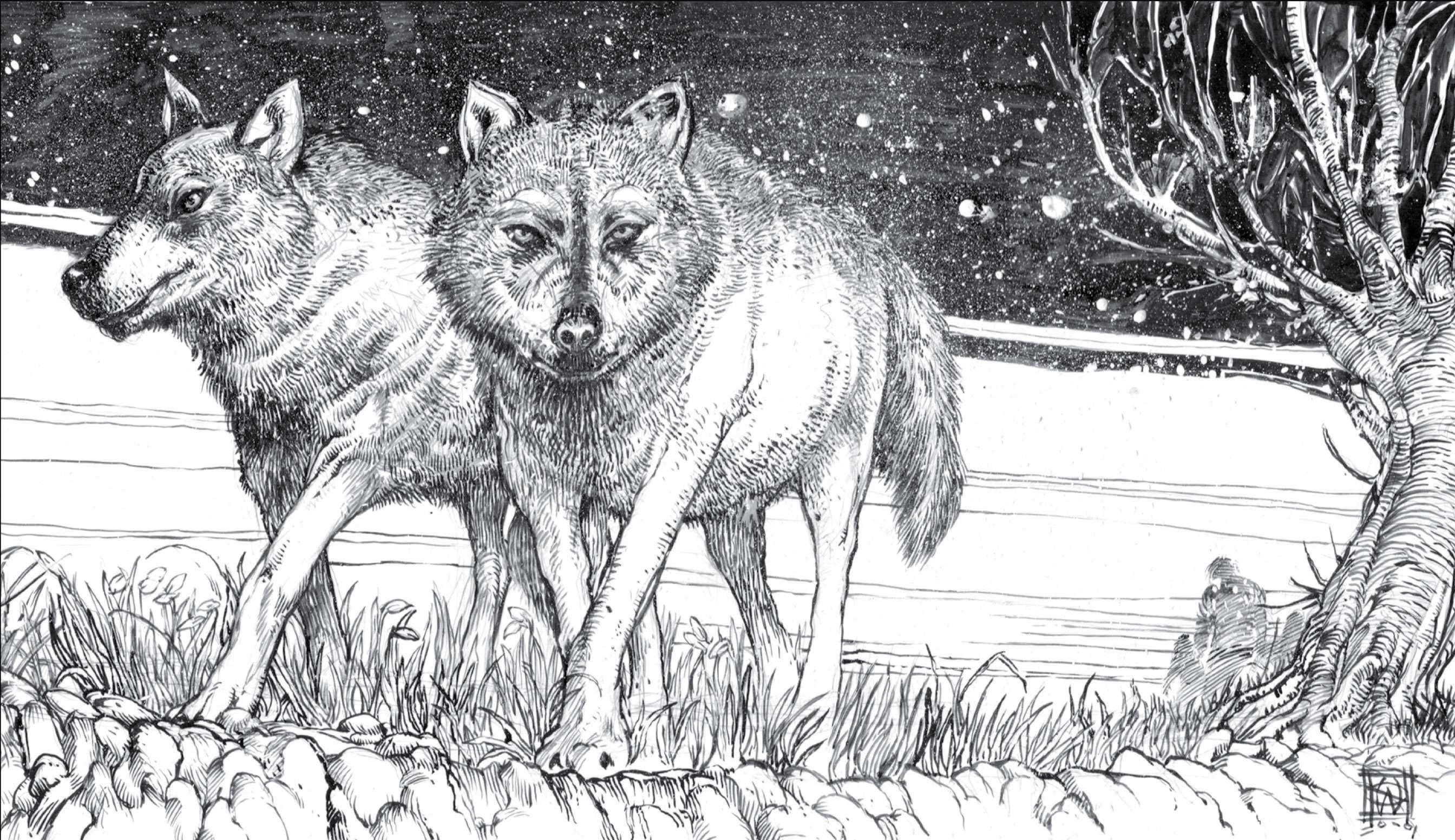 William Simpson drawing of 'Game of Thrones' direwolves