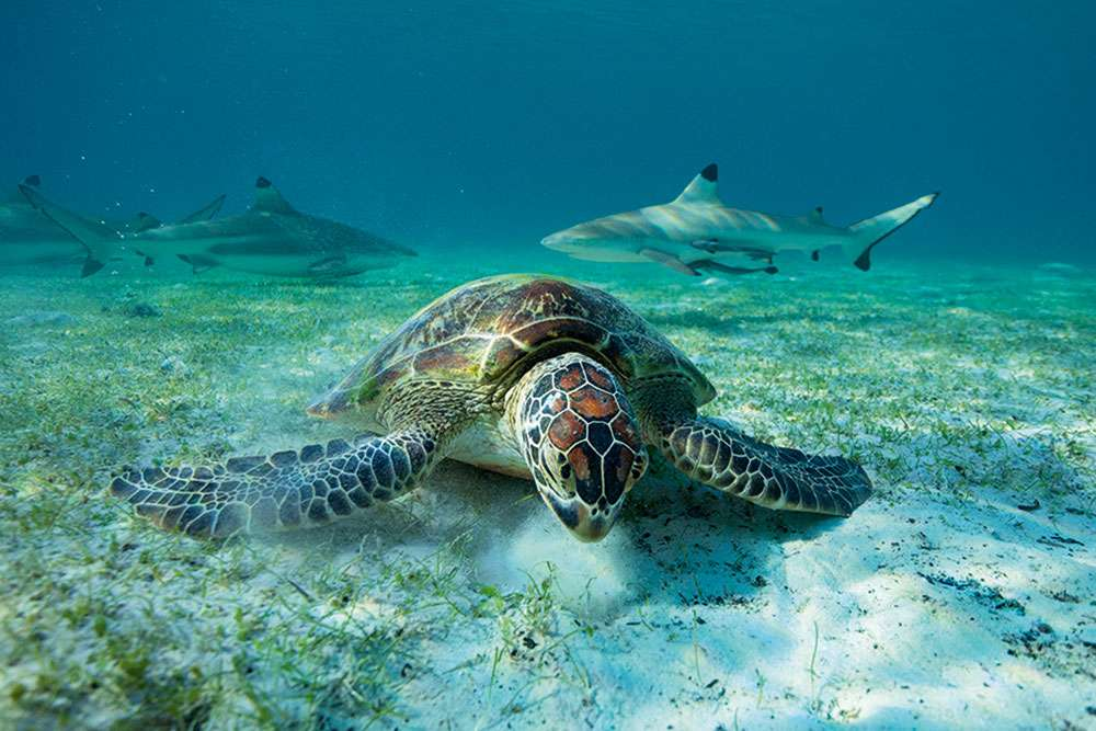 A turtle in 'Our Planet'